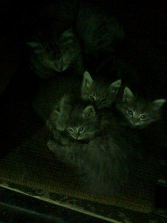 Осторожно кошки...2.