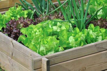 Конвейерный способ выращивания овощей.