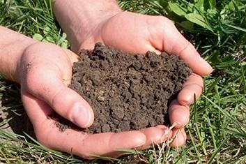 Как вылечить почву.