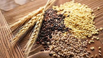 Про зерно и злаки.