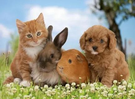 О домашних животных.