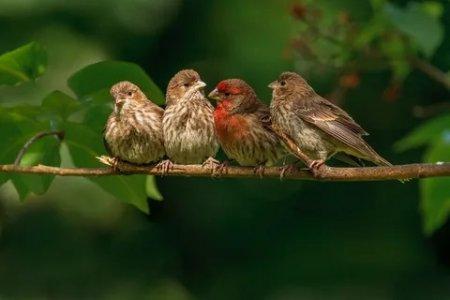 Про птиц.