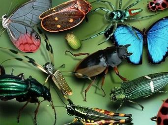 Про насекомых.