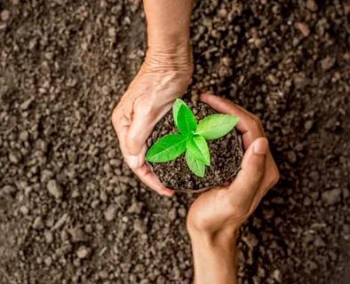 Растения защищают растения.