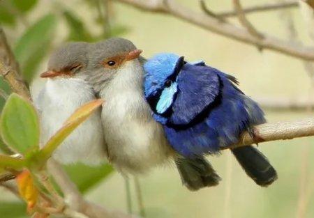 Ох, уж эти птицы!